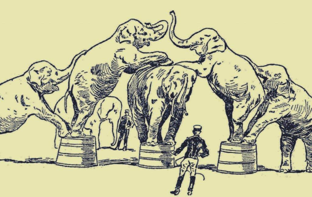 Elefanten bei einer Zirkusvorstellung