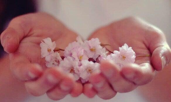 Rosa Blüten werden von zwei Händen gehalten