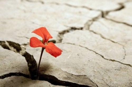 Blume wächst aus Felsen