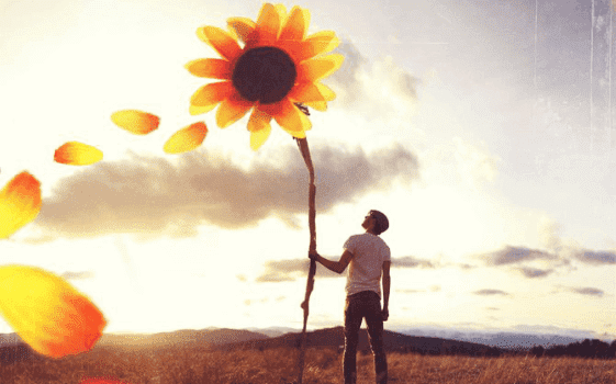 Mann hält eine große Sonnenblume in seiner Hand
