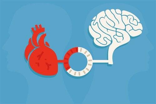 Vernunft und Emotion: das Gleichgewicht, das gute Entscheidungen hervorbringt