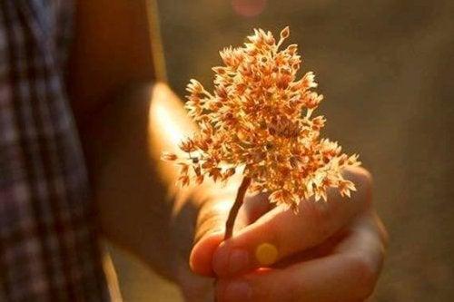 Verwelkte Pflanze in der Hand