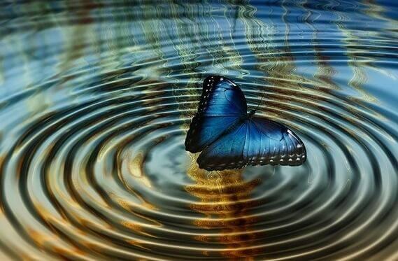 Blauer Schmetterling auf einem See