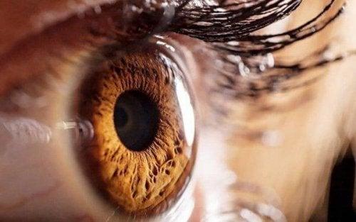 Auge nimmt Lichtreize wahre
