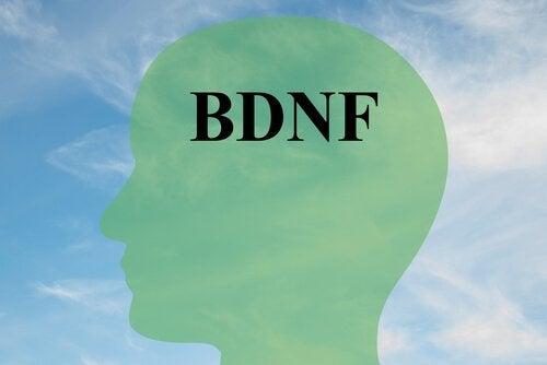 Über die Erhöhung des BDNF, des Schlüsselproteins für gesunde Gehirnzellen