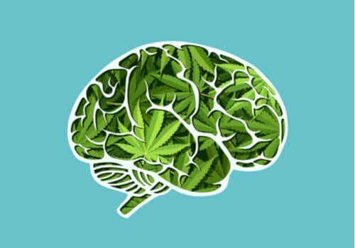 Die langfristigen Auswirkungen von Cannabis auf das Gehirn