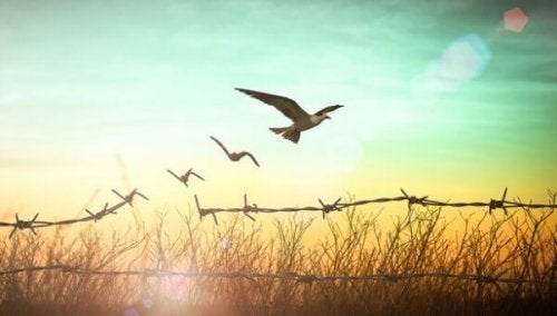 Aus Stracheldrahtzaun werden Vögel
