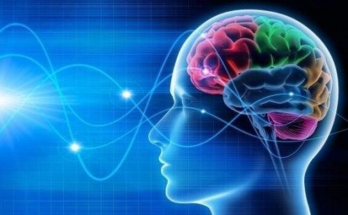Hirn und Hirnwellen