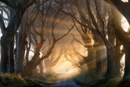 Sonnenstrahlen fallen durch die Bäume in einer Allee.
