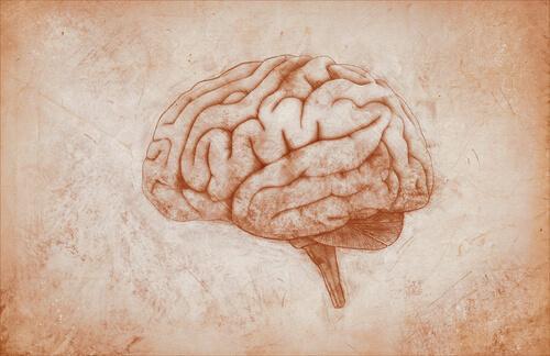 Abbildung des Gehirns