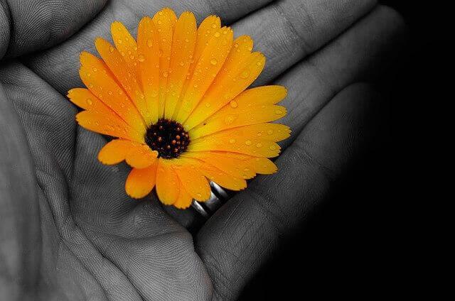 Gelbe Blüte liegt auf einer Handfläche