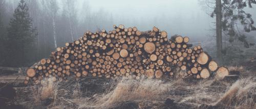 Holzstämme, die im gerodeten Wald gestapelt wurden