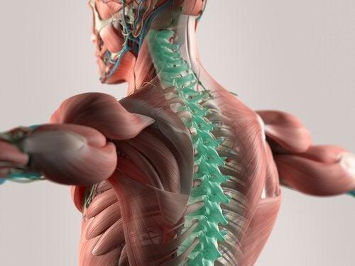 Die Zerebrospinalflüssigkeit: Der Puffer des zentralen Nervensystems