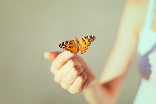 Ein Schmetterling sitzt auf der Hand einer Frau.