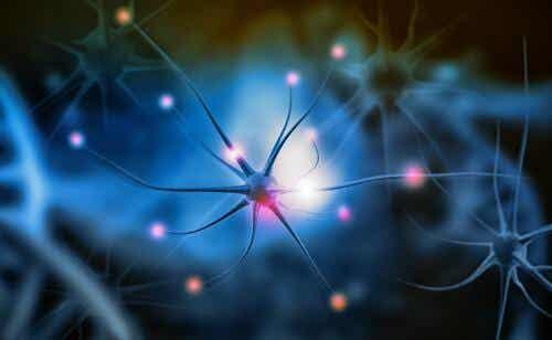 Was ist die Neurogenese?