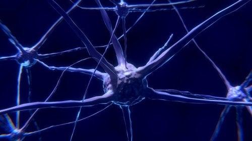 Neuronen: Was sie sind und wie sie funktionieren