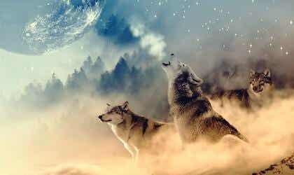 Was ist die Wolfsmedizin?