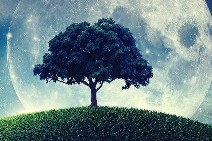 Das Gleichnis vom Baum, der nicht wusste, wer er war