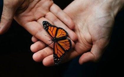 Hände, in denen ein Schmetterling sitzt