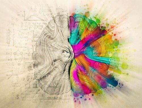 Linke und rechte Gehirnhälfte