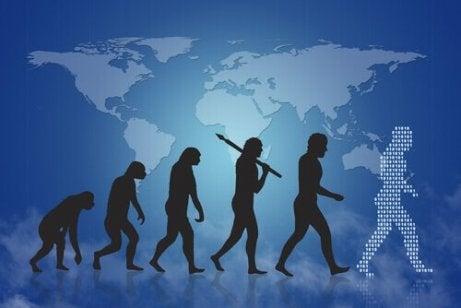 Grafische Darstellung der menschlichen Evolution.