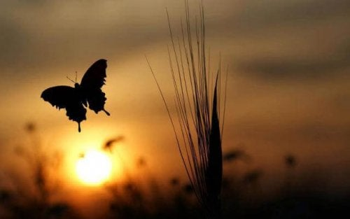Ein Schmetterling im Sonnenuntergang