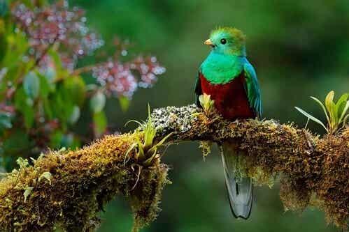 Die wunderschöne Legende vom Vogel Toh