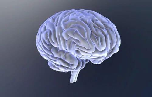 Gehirn mit seinen Spalten und Furchen