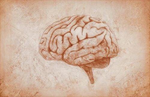 Der motorische Kortex: Eigenschaften und Funktionen