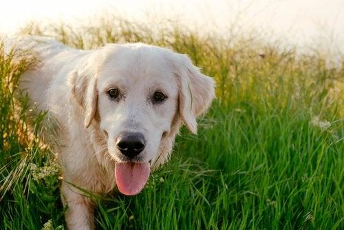 Foto eines Labradors