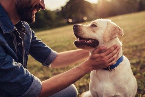 Geschichten über Hunde, die in die Geschichte eingegangen sind