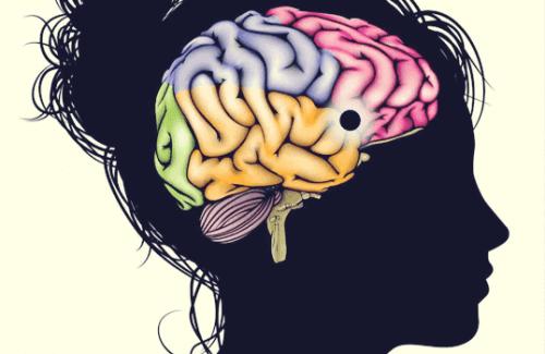 Der Nucleus accumbens: Ein Zentrum des Lernens, der Motivation und des Vergnügens