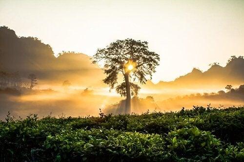 Die Sonne geht auf und scheint zwischen den Blättern eines Baums durch.