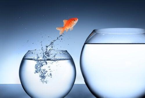 Fisch springt von einem Aquarium ins andere