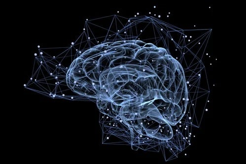 Signalwege im Gehirn