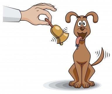 Hund beginnt beim Klingeln einer Glocke zu speicheln