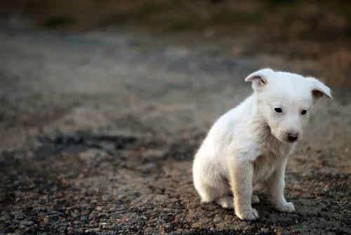 Tiere und ihr Bewusstsein für das Leiden