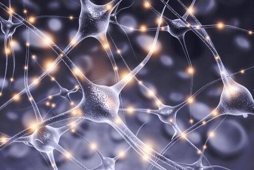 Konnektionismus und Neuronen