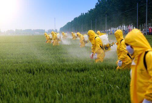 Die Auswirkungen von Pestiziden auf das Gehirn