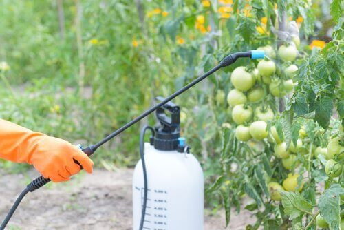 Der Einsatz von Pestiziden in der Landwirtschaft ist weitverbreitet.