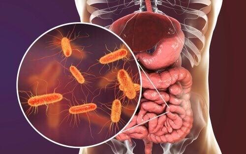 Unser Darm ist mit Bakterien besiedelt, die auch für ein Gehirn-Mikrobiom verantwortlich sein könnten.