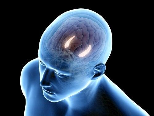 Hippocampus im Kopf
