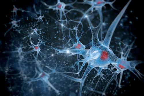Blaue Neuronen mit roten Kernen