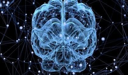 Schläft das Gehirn?