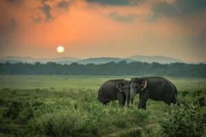 Die traurigen Elefanten: eine wahre Geschichte