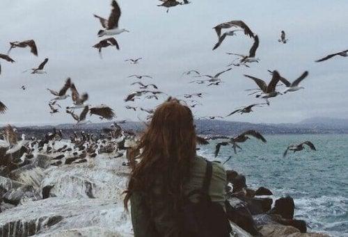 Raum der Geheimnisse - Vögel