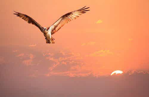 Eine Geschichte über Identität und einen Vogel, der seine nicht kannte