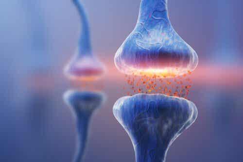 Arten von Synapsen: Neuronale Kommunikation