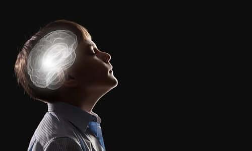 Bauchgefühl - Gehirn