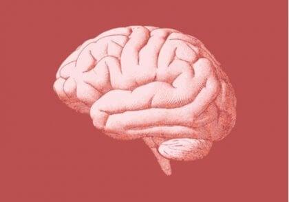 Ein Bild des menschlichen Gehirns.